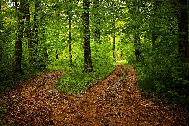 path-1345721_640